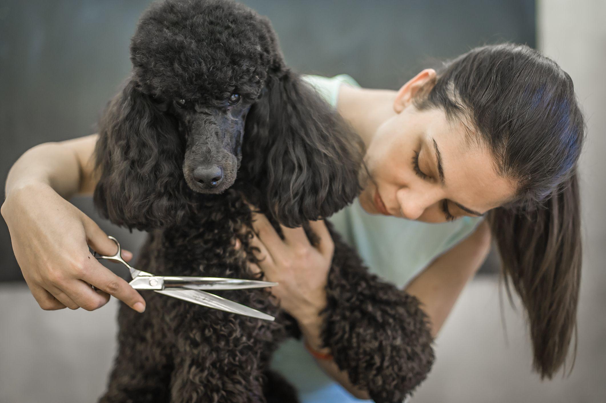 cortar el pelo a un perro