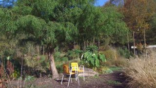 El taxodium mucronatum o ahuehuete - Herencia