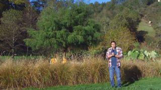El taxodium mucronatum o ahuehuete - Inicio