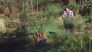 Cuidados del papiro durante el invierno - Cultivo en contenedor