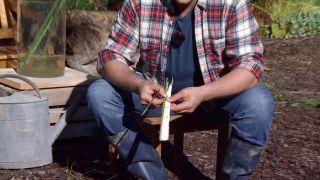 Cuidados del papiro durante el invierno - Curiosidades sobre el papiro
