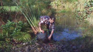 Cuidados del papiro durante el invierno - Eliminar raíces