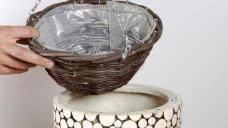 Plantación de hoya linearis en cestos colgantes - Paso 1
