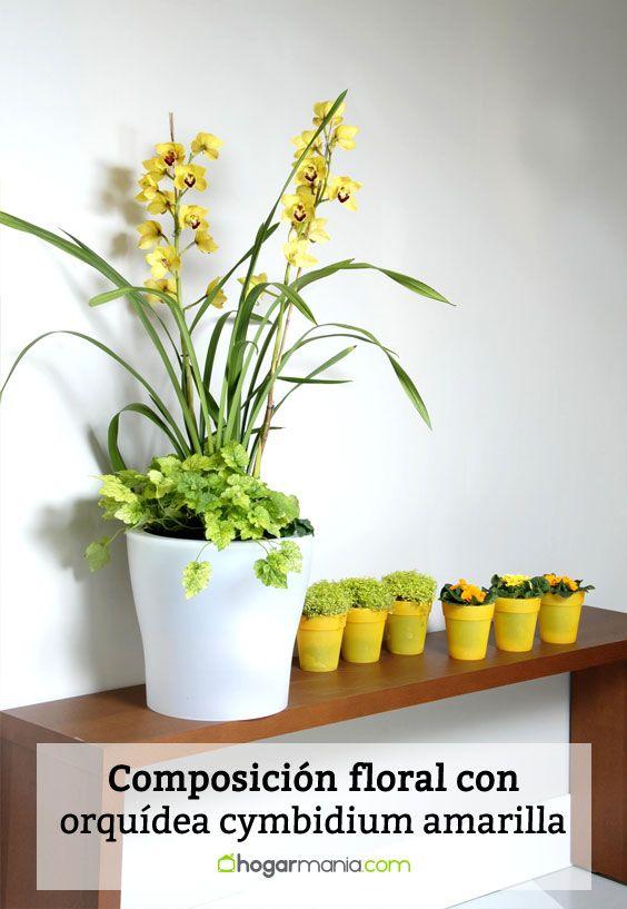 Detalle de composición floral con orquídea cymbidium amarillo y soleirolea