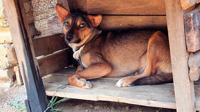 perros atados