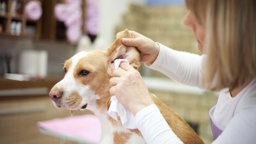 Resultado de imagen para limpiar orejas perro