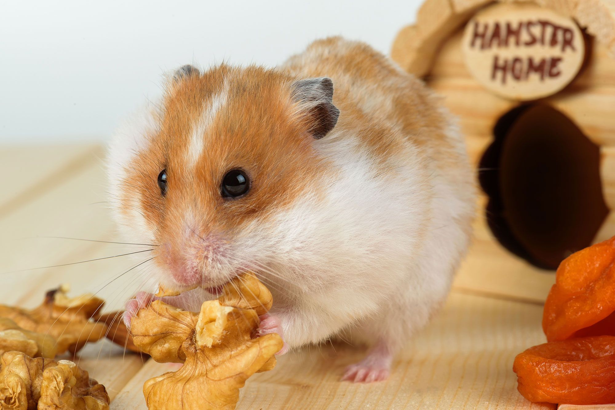 hamster salud