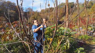 Cómo podar una higuera - Podar ramas del año