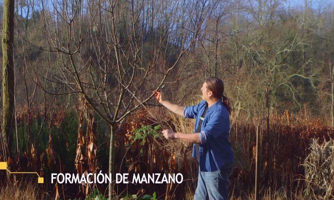 C mo conseguir que tu manzano de m s frutos bricoman a - Bricomania jardineria ...