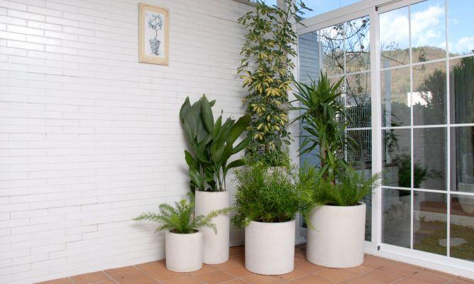 Composición Con Plantas Para Terraza Cerrada Orientada Al