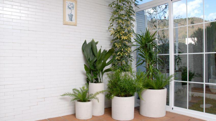 Tono Terraza : Composición con plantas para terraza cerrada orientada al norte