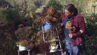 Centros de flores de invierno - Agastache