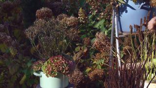 Centros de flores de invierno - Anémona japónica
