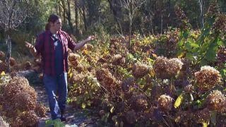 Centros de flores de invierno - Hortensia annabelle