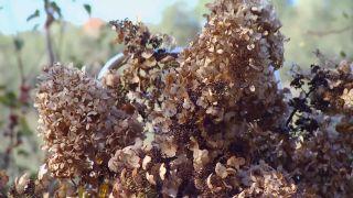 Centros de flores de invierno - Hortensias