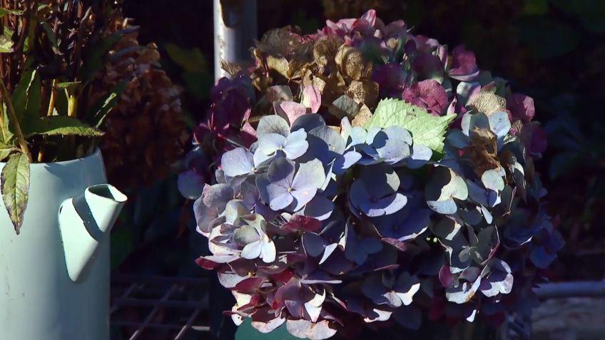 Centros de flores secas de invierno - Decogarden