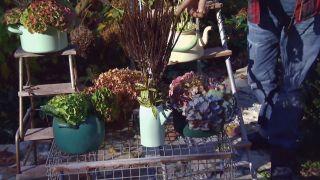 Centros de flores de invierno - Veronicastrum virginicum album
