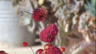 Recolectar bayas y frutos de invierno para hacer centros decorativos - Centro 3