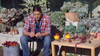 Recolectar bayas y frutos de invierno para hacer centros decorativos - Manualidades