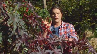 Recolectar bayas y frutos de invierno para hacer centros decorativos - Ricino