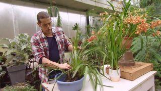 Orquídeas que florecen en invierno - Orquídea rústica