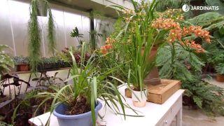 Orquídeas que florecen en invierno - Detalle final