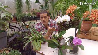 Orquídeas que florecen en invierno - Variedades de orquídeas