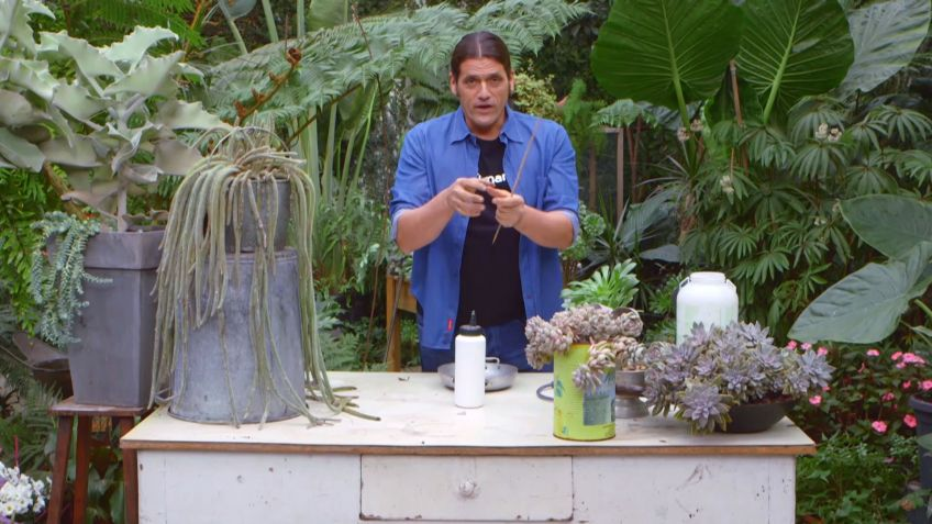 Los consejos de jardinería del fin de semana 3 y 4 de febrero de ...