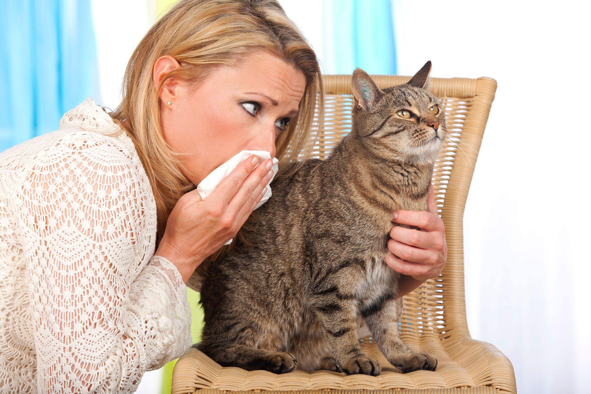 síntomas alergia mascotas