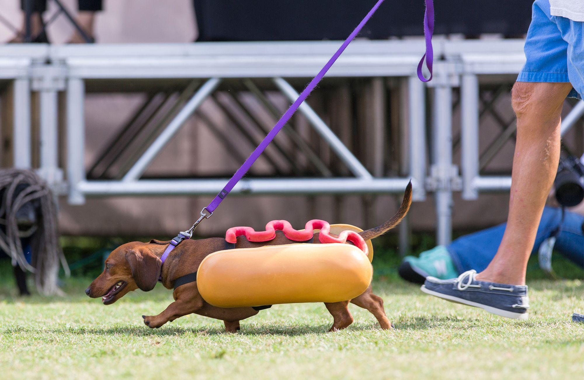 desfile disfraces perros
