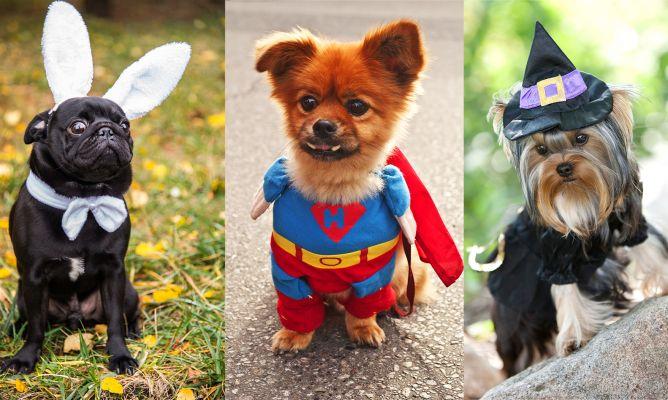 4 consejos si vas a disfrazar a tu mascota - Hogarmania
