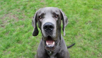 15 Razas De Perros Medianos Hogarmania