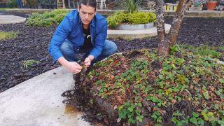 ¿Cuál es la mejor época para plantar fresas? - Cómo se reproducen