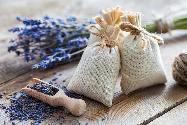 bolsas semillas
