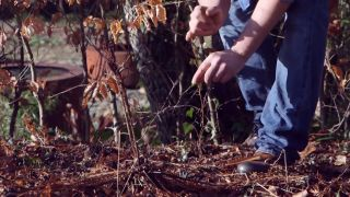 Beneficios de la hiedra para el ecosistema - Crecimiento