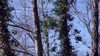 Beneficios de la hiedra para el ecosistema - Su objetivo, la luz