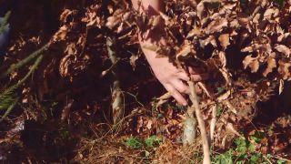 Qué es la marcescencia - Plantación de setos
