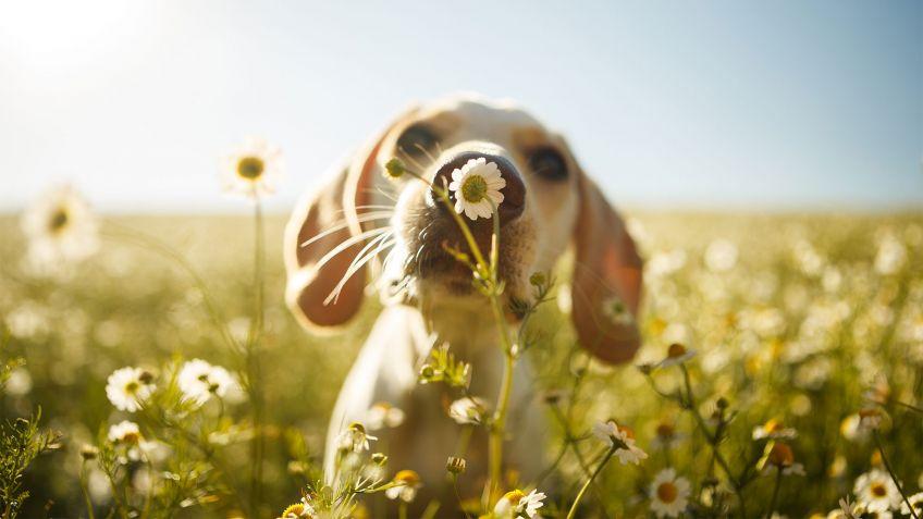 A la luz de la luna. - Página 5 Mascotas-cuidados-primavera-848x477x80xX