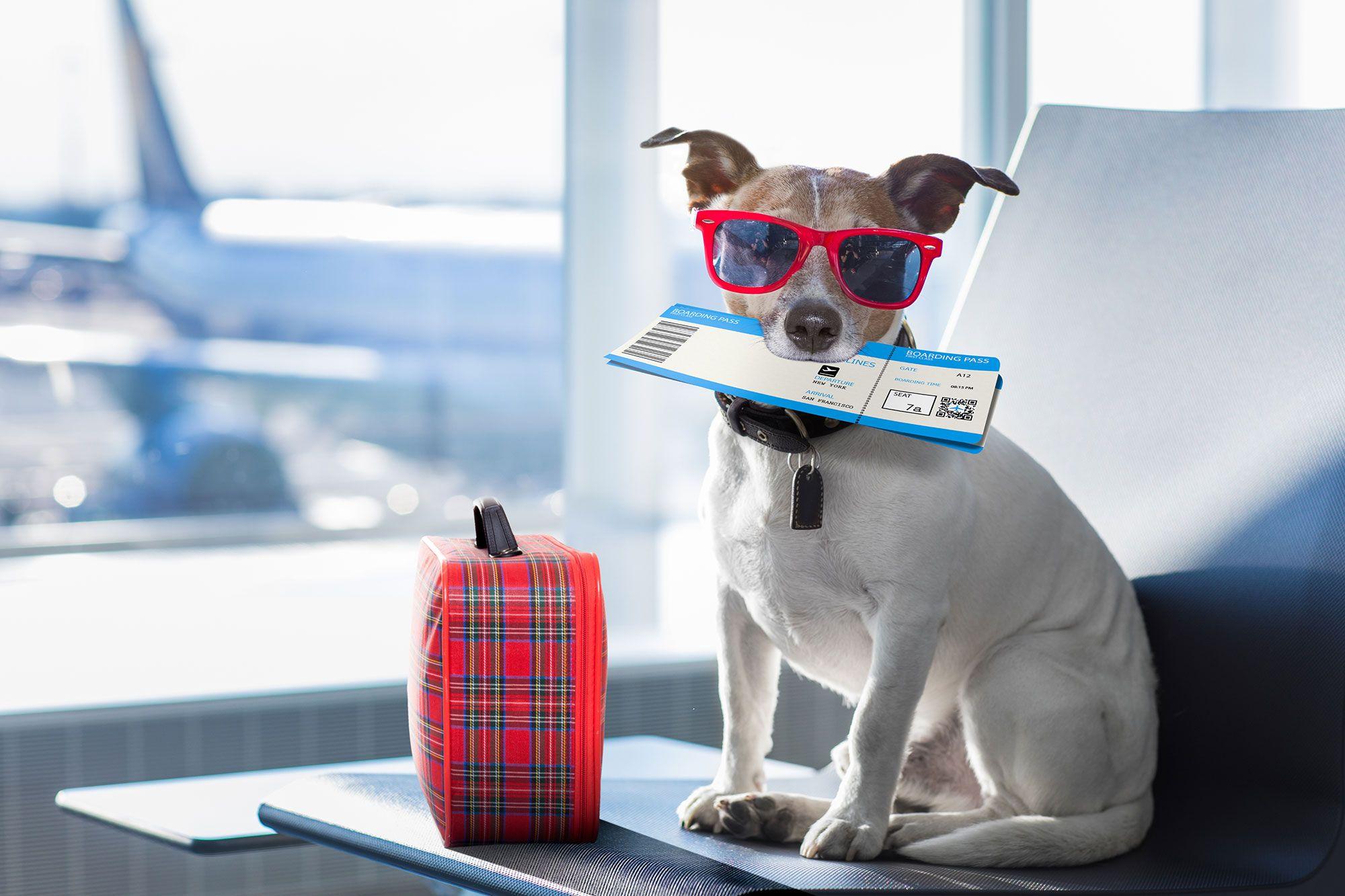 documentación viaje mascotas
