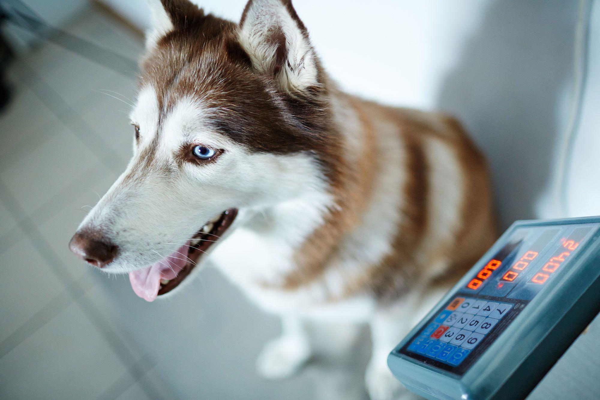 control peso perros