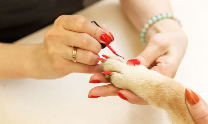 Por Qué No Pintar Las Uñas Al Perro Hogarmania