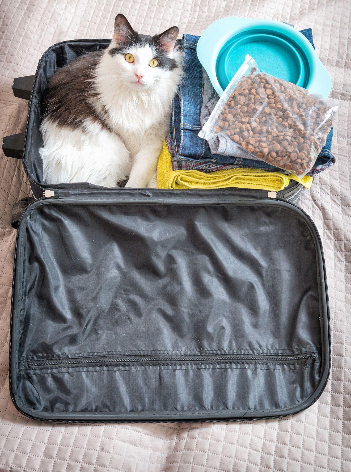gatos equipaje viaje