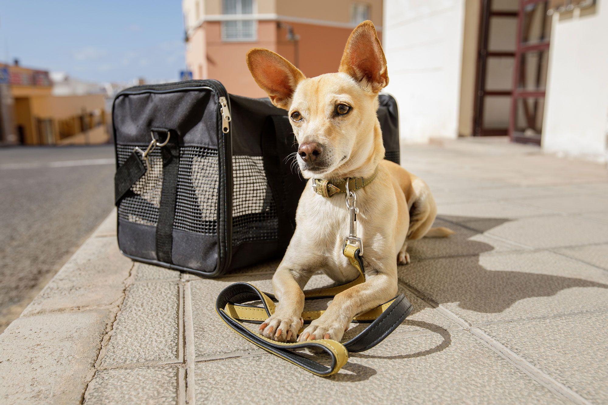 maleta viaje perros
