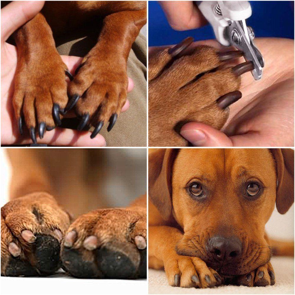 corta uñas perros