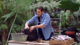 Plantar bulbos de dalias - Plantación