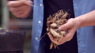 Plantar bulbos de dalias - Plantar los bulbos del año pasado