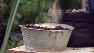 Plantar bulbos de dalias - Sustrato ligero con arena