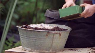 Plantar bulbos de dalias - Sustrato ligero con arlita
