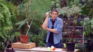 Capsulas de enraizamiento para reproducir plantas por acodo aéreo - Acodo aéreo