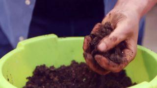 Capsulas de enraizamiento para reproducir plantas por acodo aéreo - Paso 3